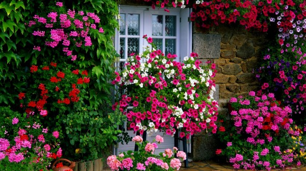 farm_house_garden
